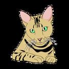 Kaķu poza