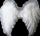 крылья 4